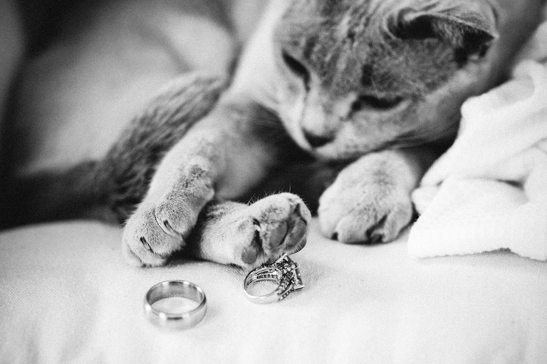 Kitten playing with wedding rings